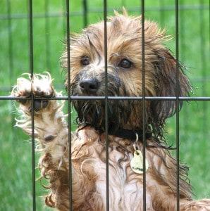 no a las jaulas para perros