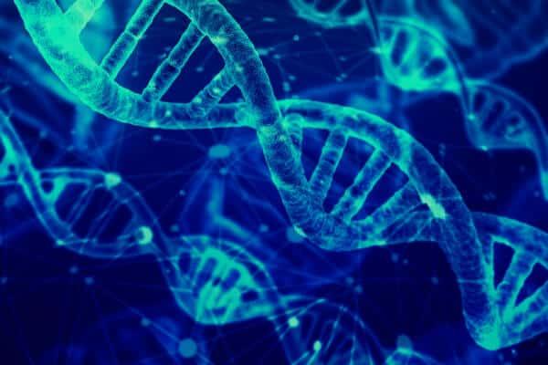 Las proteinas y su gran importancia para el organismo